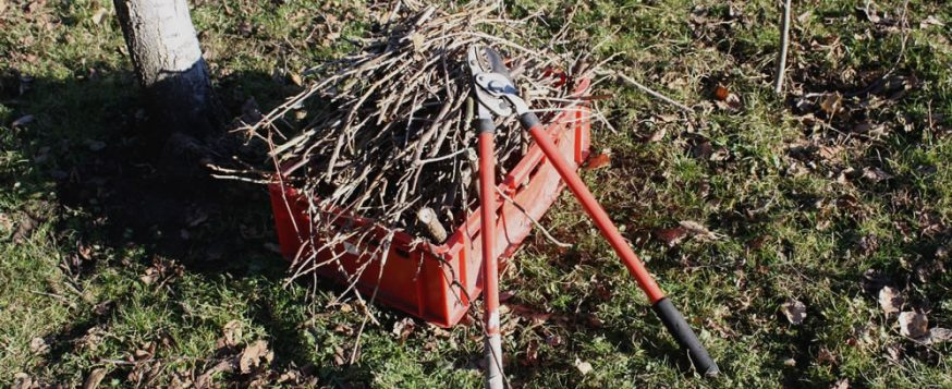 box of pruned branches, spring cleanup