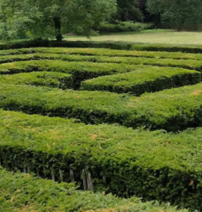 Labyrinth Hedge: Labyrinths Coming to Washington D.C.