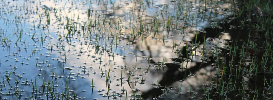 water saturated grass, puddle