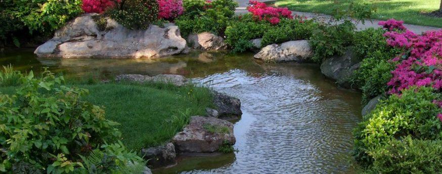 Garden Pond, landscape