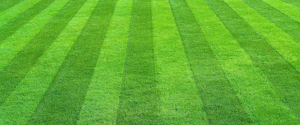 lawn mowed with stripes