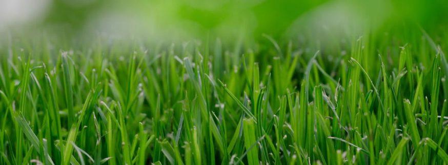 Luxurious Lawn, Green Grass