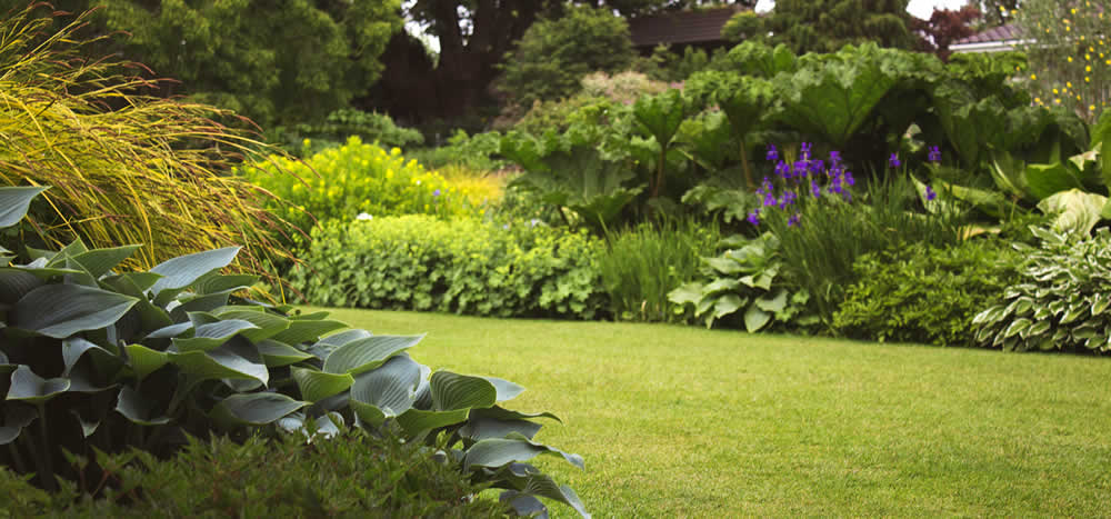 small urban garden: Montgomery County landscape