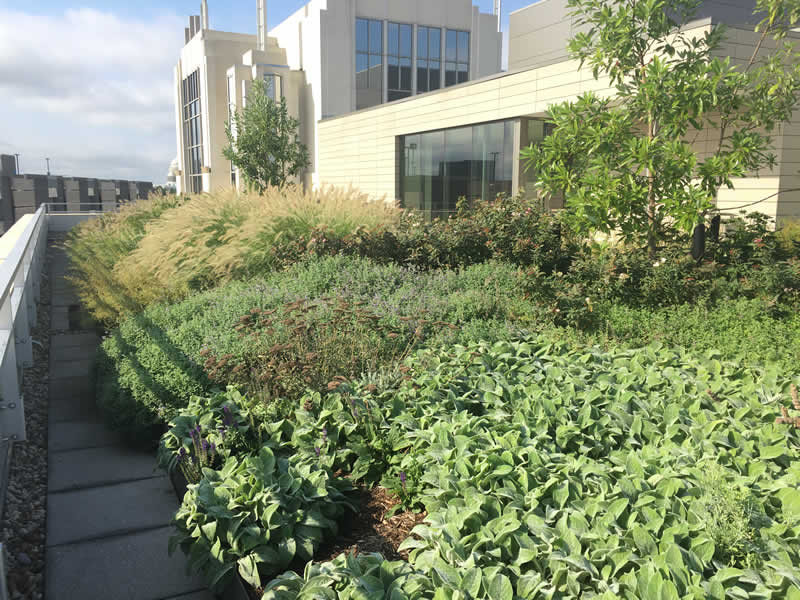 American Psychological Association (APA) Landscaping Project by Rasevic Landscape Company in Bethesda, MD