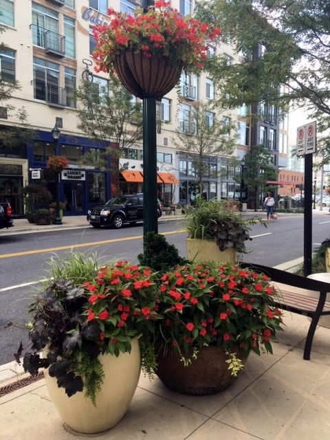 Pike and Rose Landscaping Project by Rasevic Landscape Company in Bethesda, MD