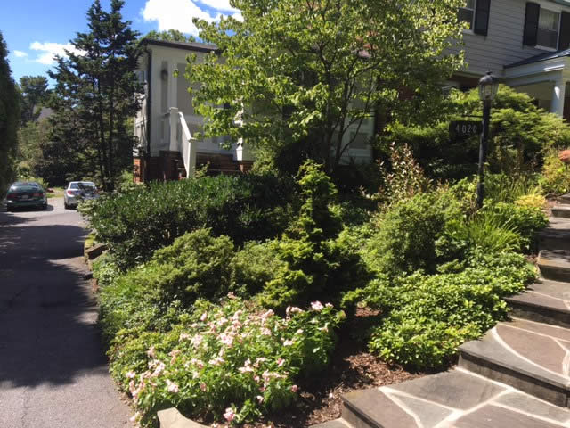 Kensington Residence Landscaping Project by Rasevic Landscape Company in Bethesda, MD