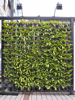 Living Wall Retaining Wall