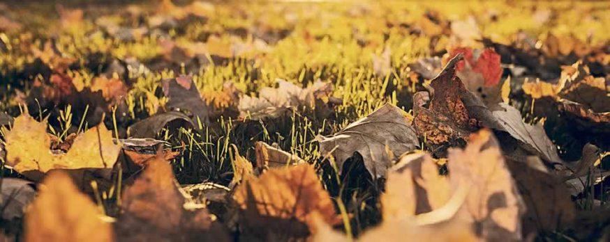 Mid-Atlantic winter prep leaves autumn